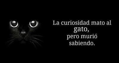 La curiosidad mato al gato, pero murió sabiendo