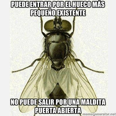 la mosca - puede entrar por el hueco mas pequeño - no puede salir por una puerta abierta