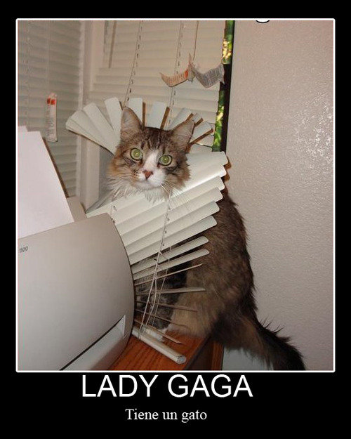Lady Gaga tiene un gato
