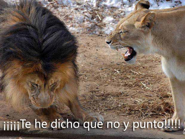 De leona a león