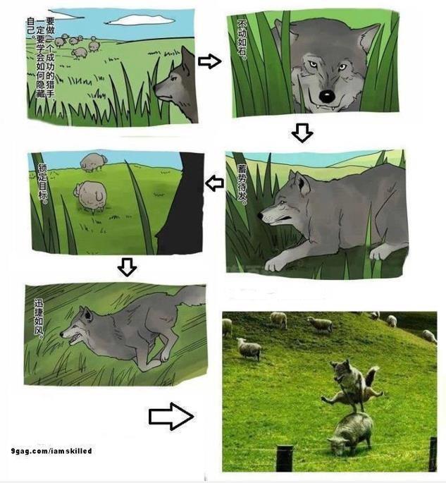 Lobo al acecho