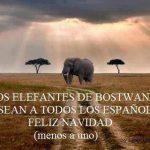 Los elefantes de Bostwana desean a todos los españoles feliz Navidad (Menos a uno)
