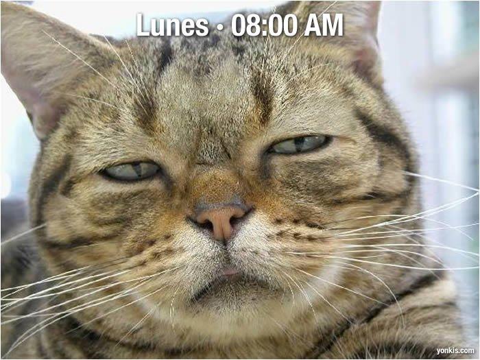 Lunes, 8:00 a.m.