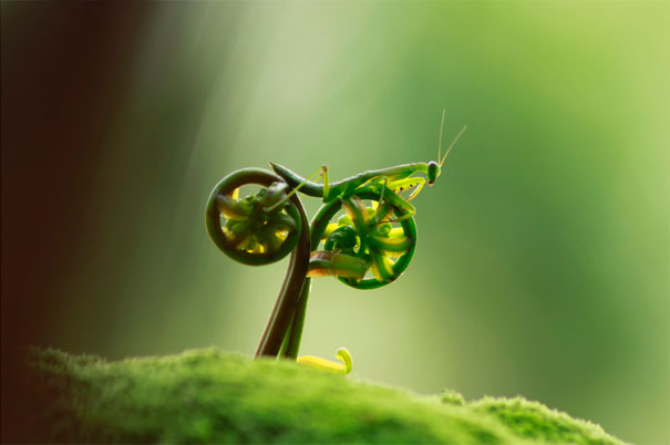 Mantis religiosa en bici