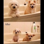 Mascotas – Mejor si no se las moja