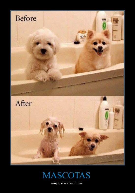 Mascotas - Mejor si no se las moja