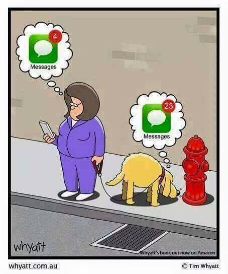 Mensajes que captan los perros vs mensajes que captan los humanos
