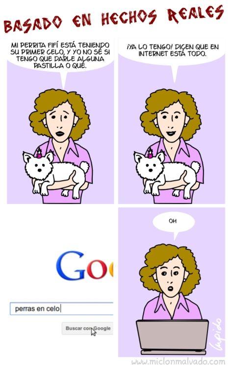 Mi perrita está en celo... buscaré información por Internet