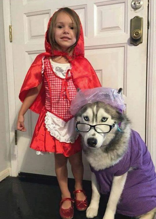 niña disfrazada de caperucita y perro de el lobo