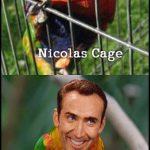 Nicolas Cage / Nicolas Free