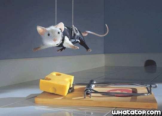Operación trozo de queso