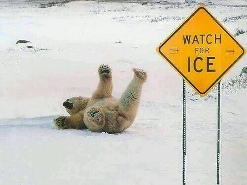 oso tirado en la nieve - watch for ice