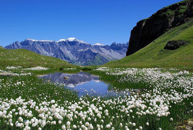 Paisaje - Lago y montañas