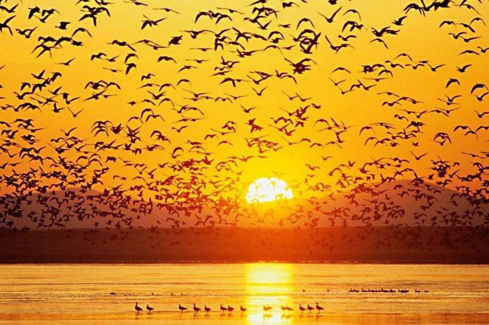 Pájaros al atardecer