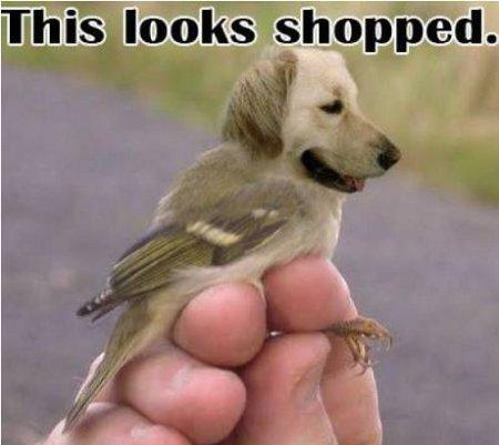 Pájaro-perro