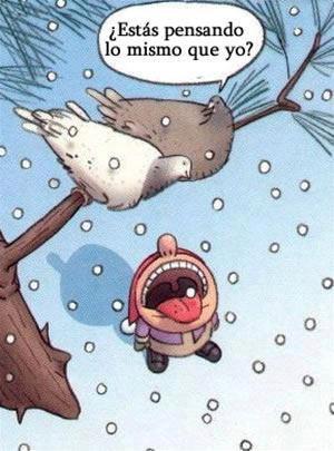 Broma aviar