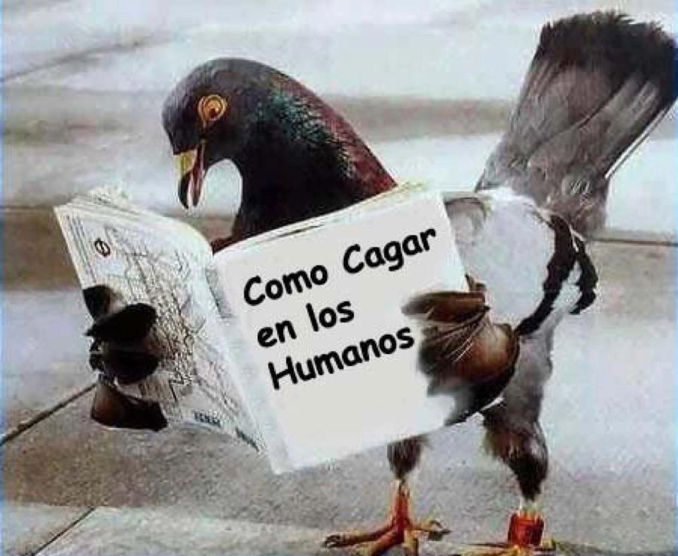 """Paloma leyendo """"Cómo cagar en los humanos"""""""