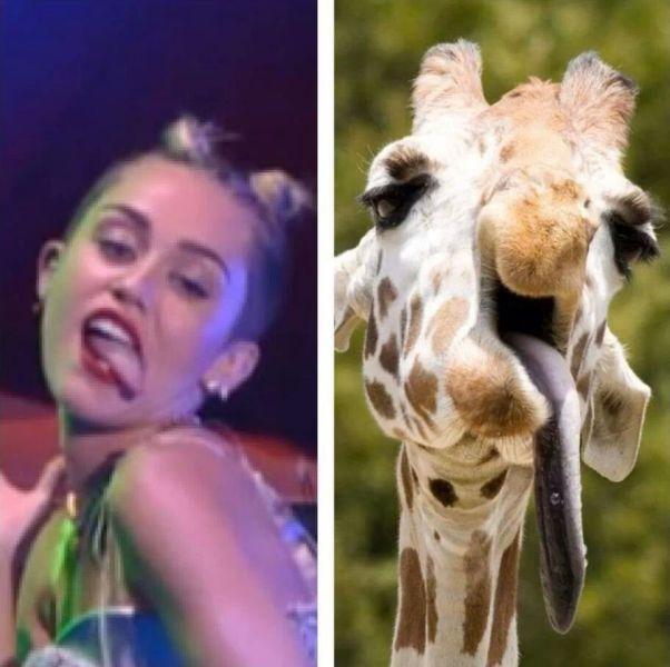 parecidos razonables careto miley cyrus y jirafa