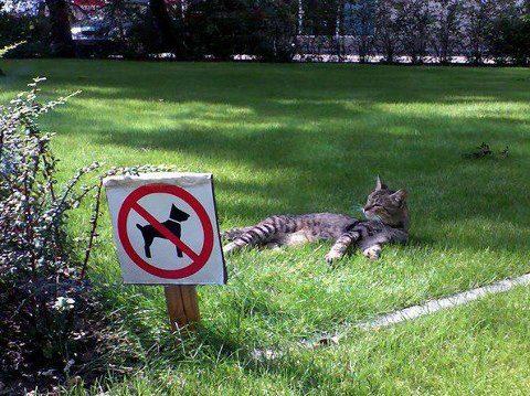 parque gato prohibido perros