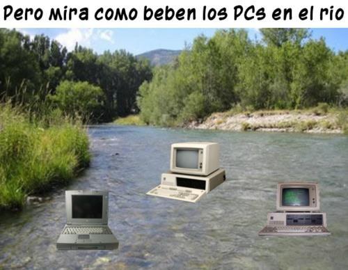 Pero mira cómo beben los PCs en el río