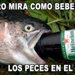 Pero mira cómo beben los peces en el río