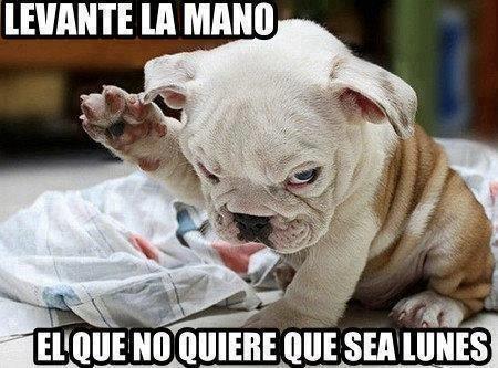 perrito levante la mano el que no quiere que sea lunes