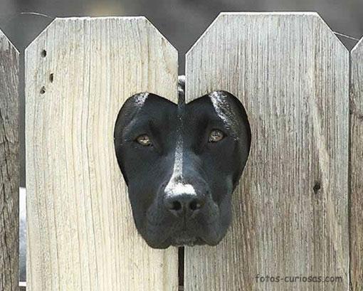 Sí, te estoy espiando. ¿Qué pasa?