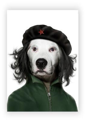 Perro - Guevara