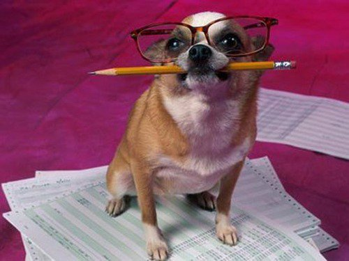 Perro contable