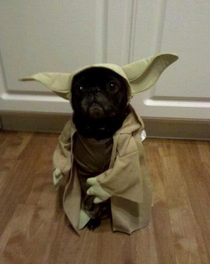 Perro Yoda