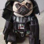 Un nuevo Darth Vader perruno se prepara para el ataque