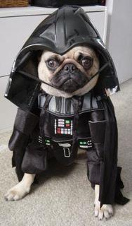 perro-disfrazado-de-darth-vader