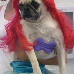 Perro disfrazado de la Sirenita