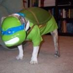 Perro o tortuga ninja