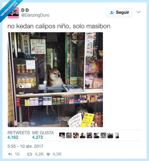 perro en kiosko no quedan calipos solo masibon