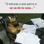O educas a ese perro o se va de casa…