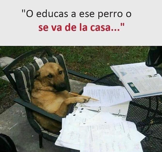 perro estudiando o educas a ese perro o se va de casa