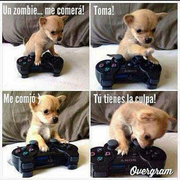 perro jugando a la play - un zombie me comera - tu tienes la culpa