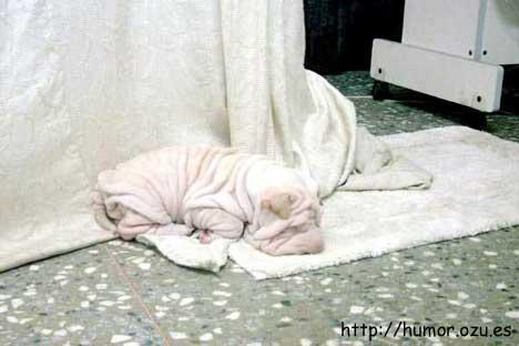 ¿Perro o toalla?