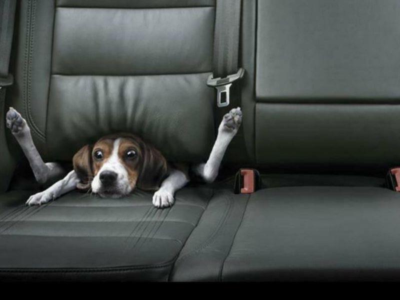 Perro pillado en asiento abatible