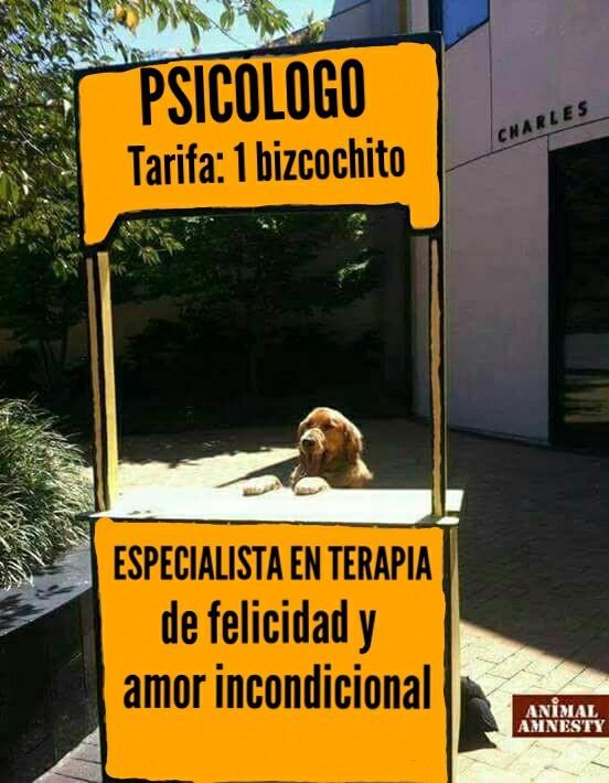 perro psicologo tarifa un bizcochito especialista en terapia de felicidad y amor incondicional