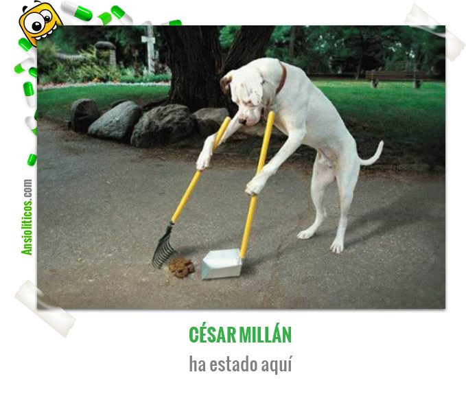 César Millán ha estado aquí