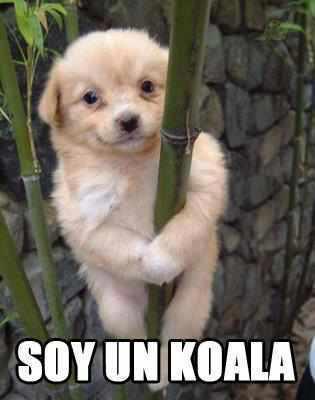 Soy un koala!