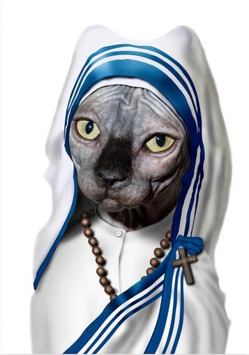 Gato - Teresa de Calcuta