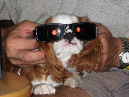 Perro Terminator