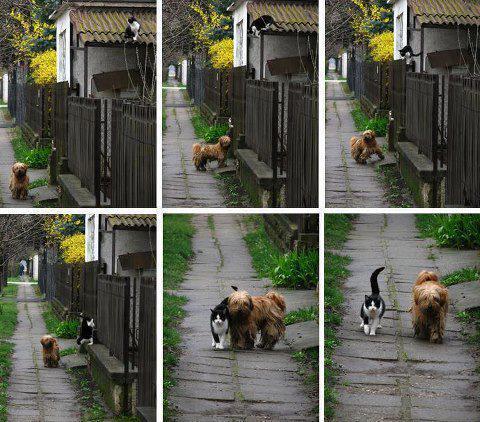 Como dos buenos amigos