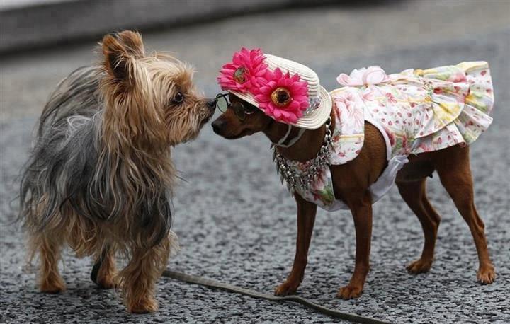 perro y perrita disfrazada