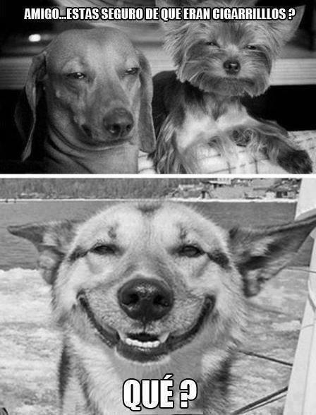 perros amigo estas seguro de que eran cigarrillos que