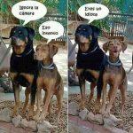 Perros posando