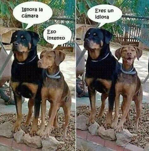 perros ignora la camara eso intento eres un idiota